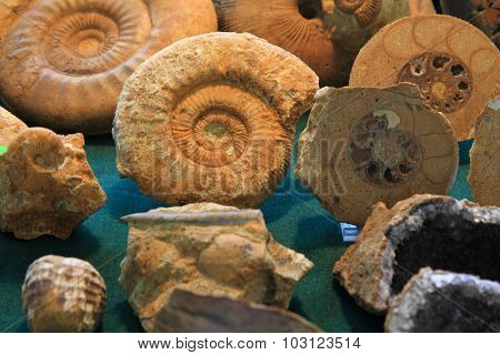 Ammonites Fossil Background