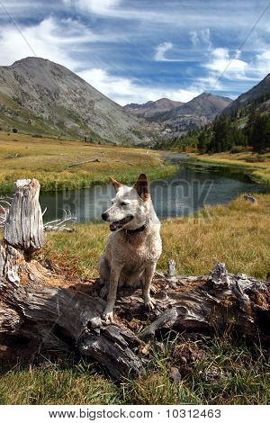 Dog: Red Heeler In The High Mountains