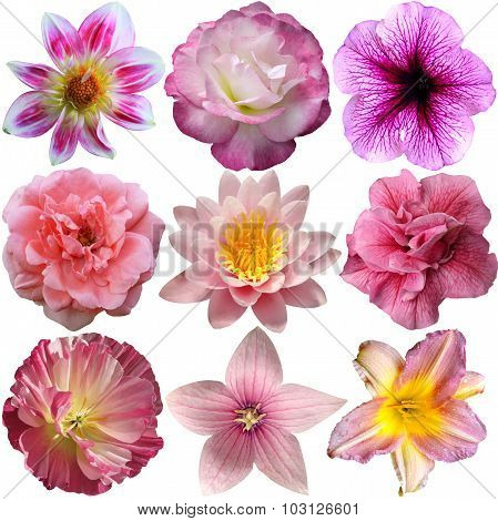 Selection Of Pink Flowers Isolated On White