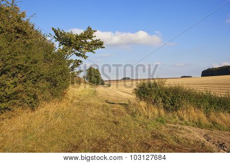 Hawthorn Hedgerow And Rural Bridleway