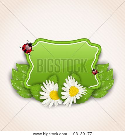 Cute spring card with flower daisies, leaves, ladybugs
