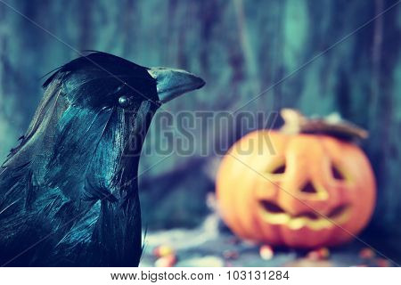 closeup of a crow and a carved pumpkin in the background in a dismal scene