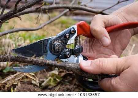 Hand With Garden Pruner