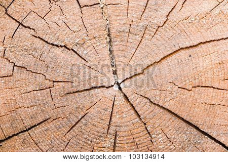 Shear Of Old Cracked Spruce Trunk Texture, Macro