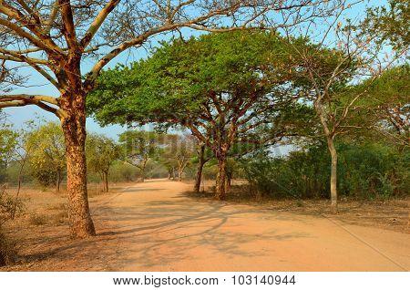 Road In Myanmar Birma Bagan
