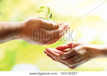 Plant in female and male hands on bright background