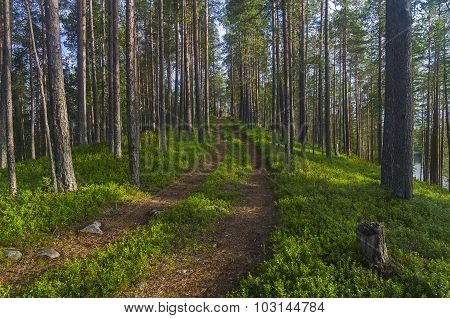 The Road In The Karelian Forest.
