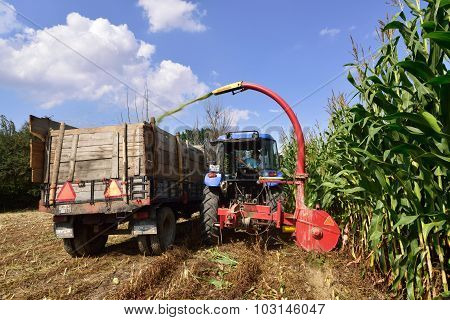 Tractor And Trailer Harvesting Corn