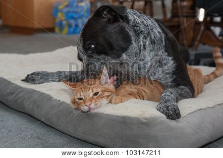 Big dog and little kitty making funny faces