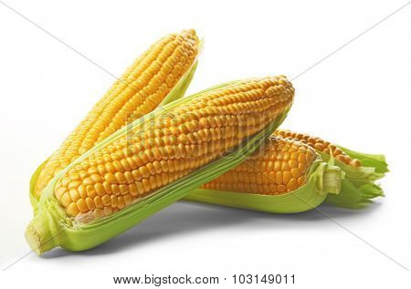 Ripe corn isolated on white