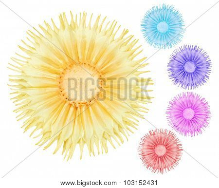 Colourful Dried Flowers on White Background