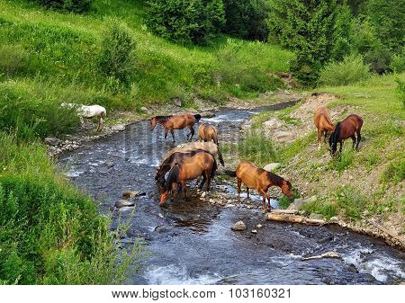 Horse Came To The River To Drink Water