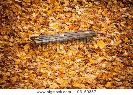 Autumn Fall Scenery. Bench And Leaves In City Park.