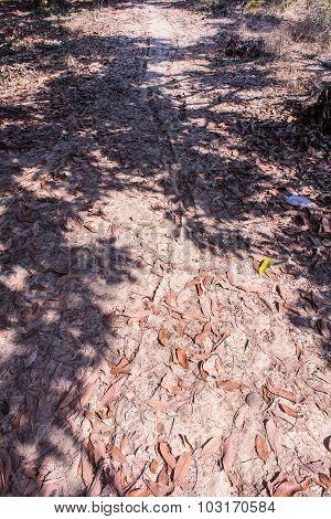 Wheel Tracks On Dirt In Asia