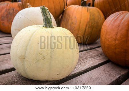 White farm pumpkins freshly harvested.