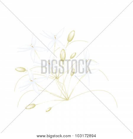 Beautiful White Indian Cork Flowers On White Background