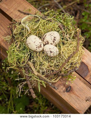 eggs in a birds next