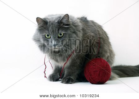 Cat With Clue Of Yarn On White Background