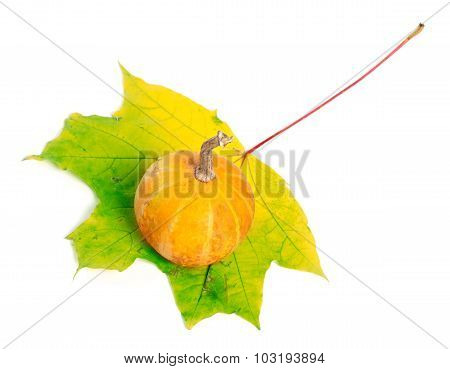Decorative Pumpkin On Yellowed Maple-leaf On White Background