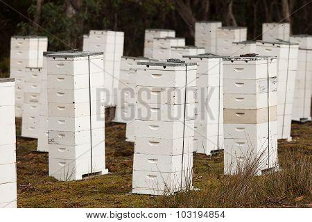 Beehive Apiary