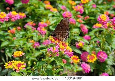 Beautiful Butterfly On A Background Of Flowers