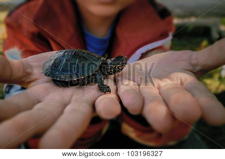 Little Turtle On Children's Hands Closeup