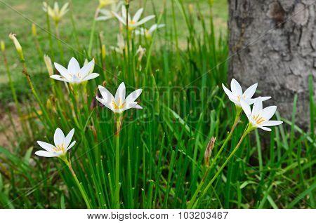 White Flower Pollen