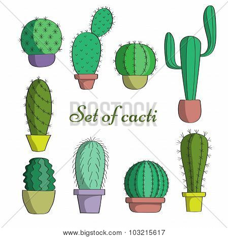 The Set Of Cacti In Pots.