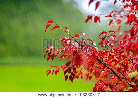Autumn scene under rain