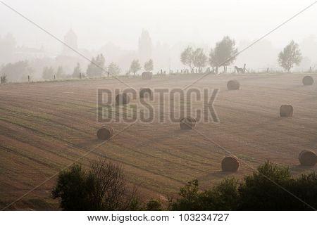 Misty Rural Scene
