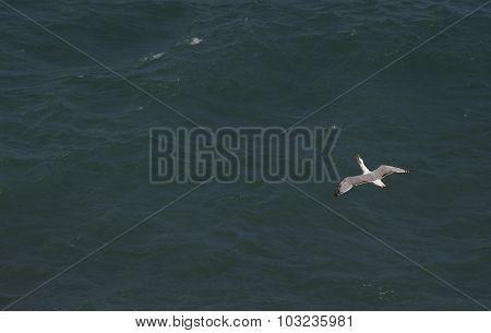Seagulls over the sea.