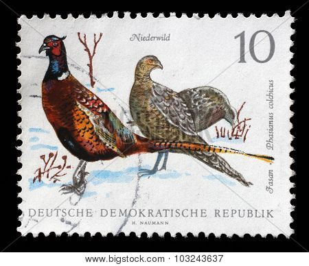 GDR - CIRCA 1968: a stamp printed in GDR shows Pheasant, Phasiaus colchicus, Bird issue, circa 1968