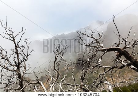 Dry dead trees in foggy mountains