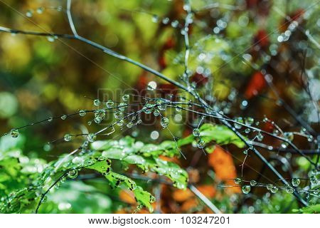 Raindrops On The Branches