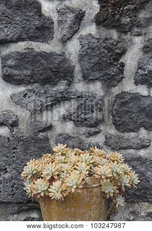 Green Plant In A Ceramic Pot And Volcanic Stone Facade