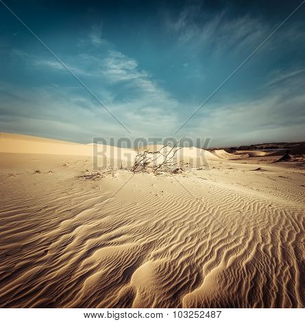 Desert Landscape With Dead Plants In Sand Dunes. Global Warming