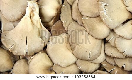 mushrooms for background