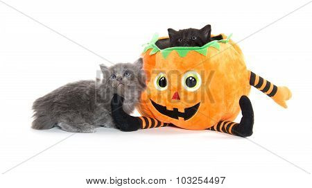 Cute Black Kitten In Pumpkin