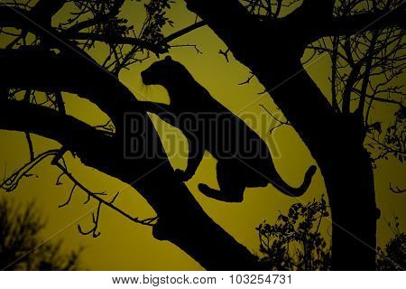 Silhouette of a Leopard