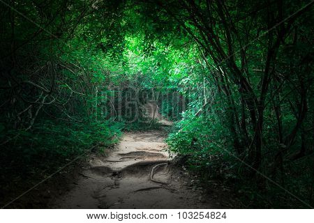 Fantasy Tropical Jungle Forest With Tunnel And Path Way