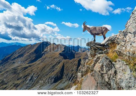 Ibex On Rock In Mountains