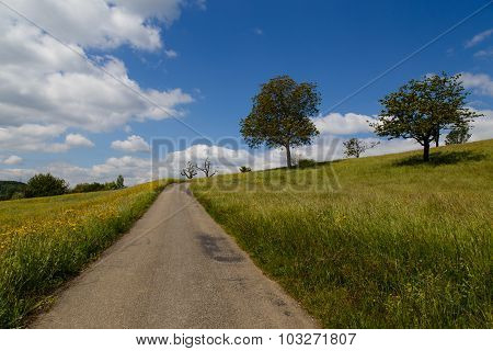 Small road through fields