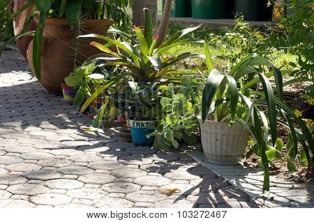 Various Container Plants Outside