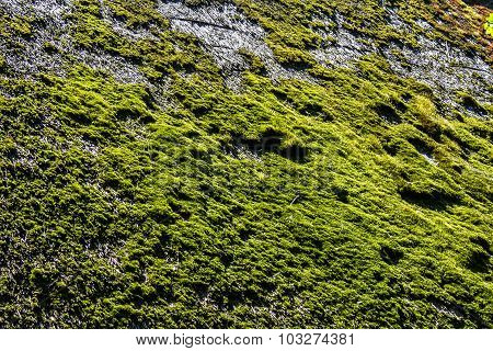 Green moss on the thatched roof