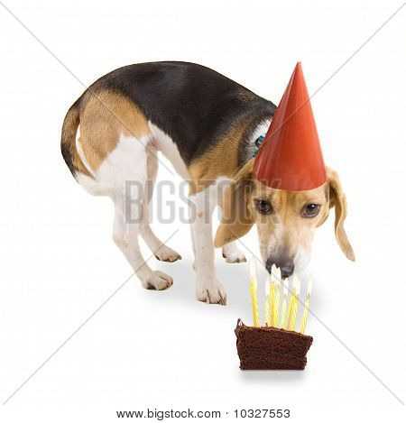 Birthday Beagle