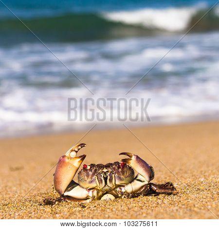 Menacing Eyes Seafood Posing