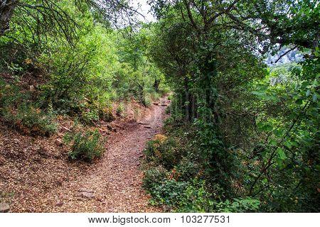 Pathway Among Trees