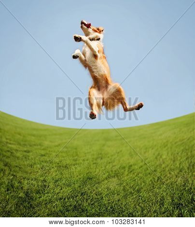 a dog jumping for joy in the middle of a field and a bright blue sky