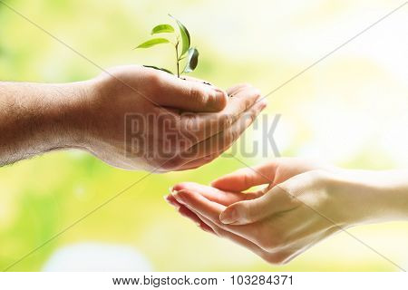 Hands of man and woman holding young plant on green natural background