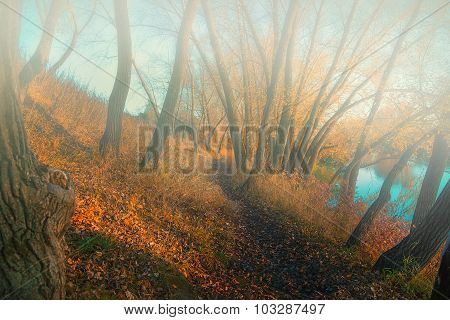 Morning Fog In The Autumn Wood